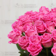Розовые розы в Санкт-Петербурге