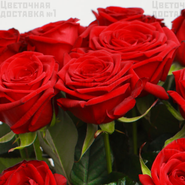 Красные розы в СПб