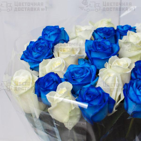 Синяя и белая роза на фото