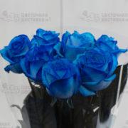 Синие розы фото СПб