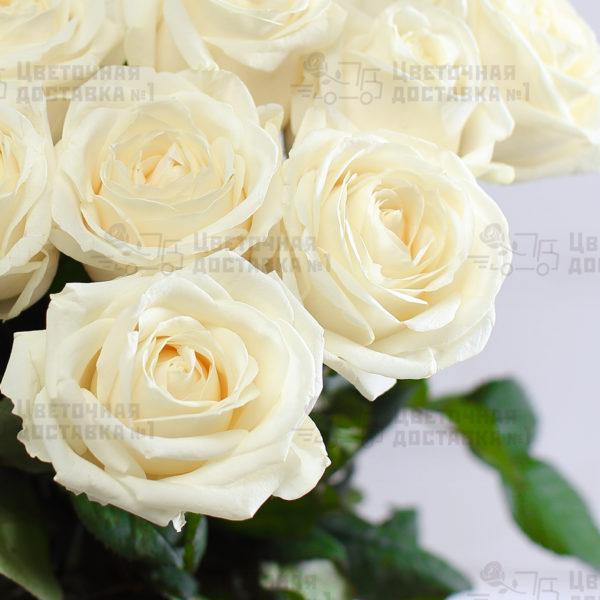 Белые розы в букете 51 роза
