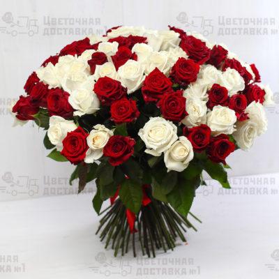 101 красная и белая роза в СПб