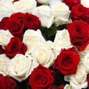 Красная и белая роза дешево